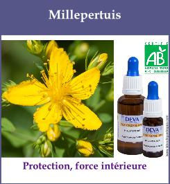 elixir floral millepertuis