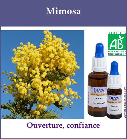 Mimosa 2