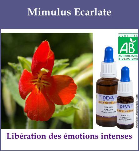 Mimulus ecarlate 2