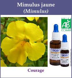 elixir floral mimulus jaune