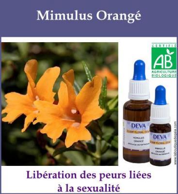 Mimulus Orangé