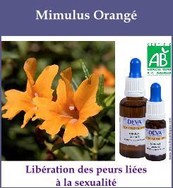 Mimulus orange