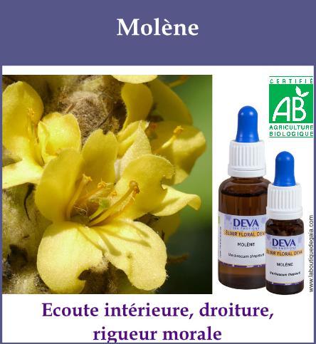 Molene 2