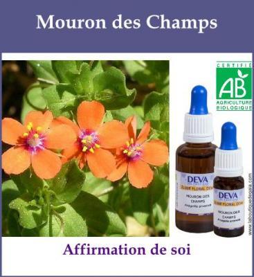 Mouron des Champs