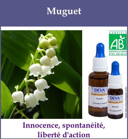 Muguet 2