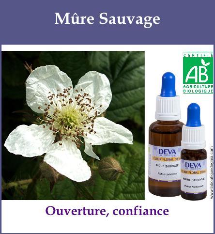 Mure sauvage 2