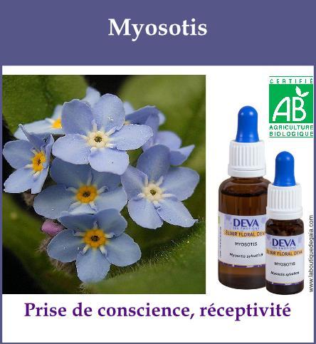 Myosotis 2