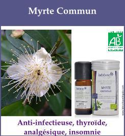 myrte commun