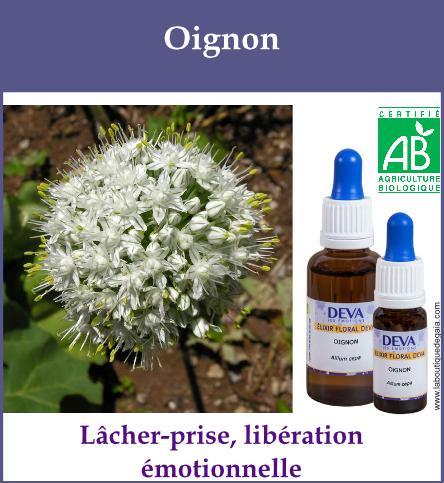 Oignon 2