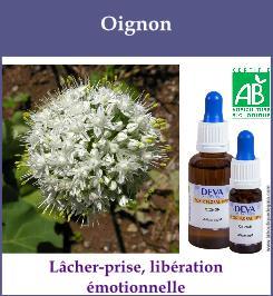 elixir floral oignon