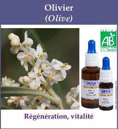 elixir floral olivier