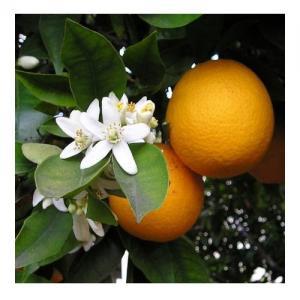 Orange Douce - Flacon : 10 ML