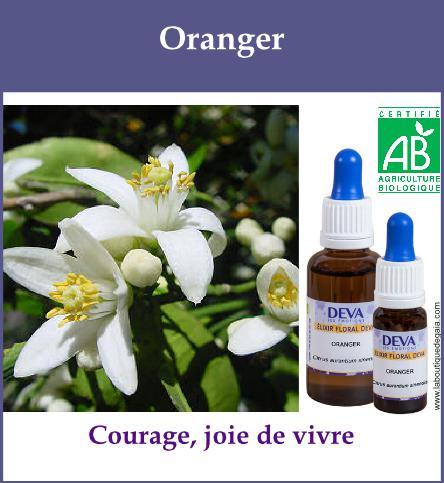 Oranger 2