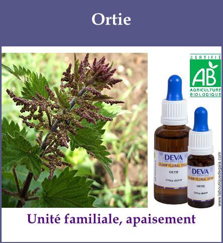 Ortie 2