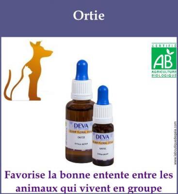 Ortie