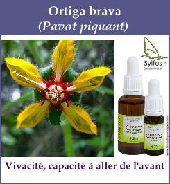 elixir floral ortiga brava