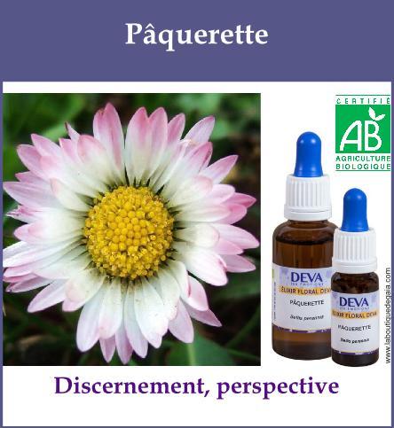 Paquerette 2