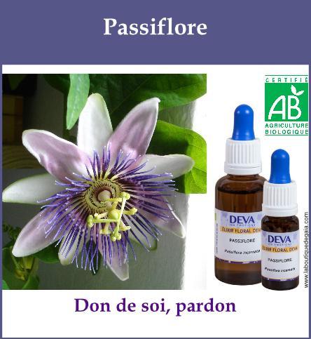 Passiflore 2