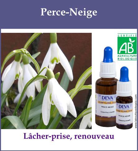 elixir floral perce neige