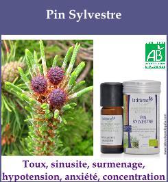 HE pin sylvestre
