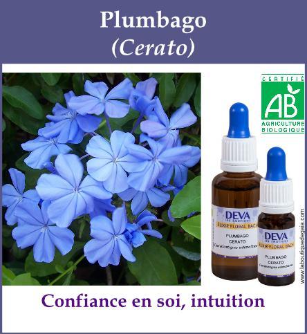 Plumbago 4