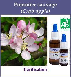 elixir floral pommier sauvage