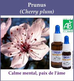 elixir floral prunus