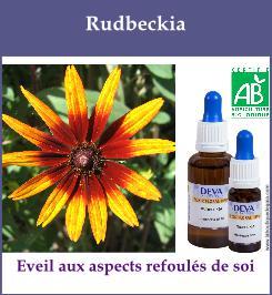 Rudbeckia