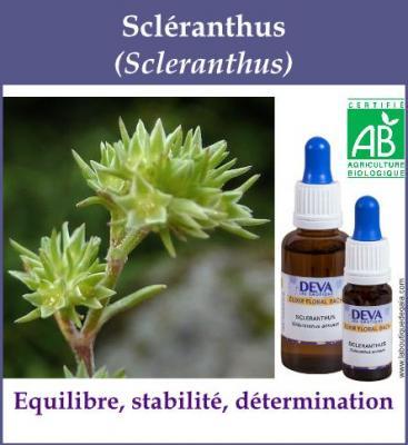 Scléranthus