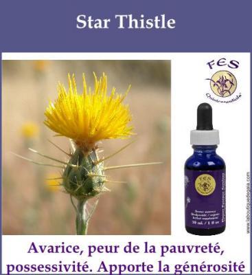 Star Thistle
