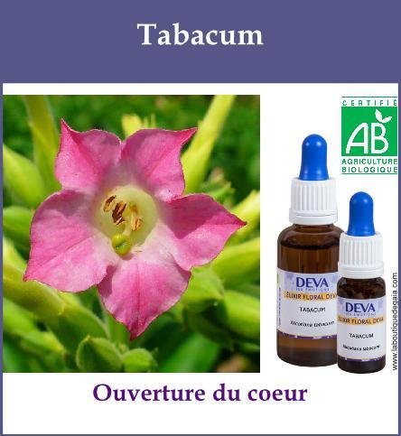 Tabacum 2