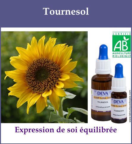 Tournesol 2