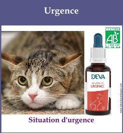 compose animaux urgence