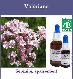 elixir floral valeriane