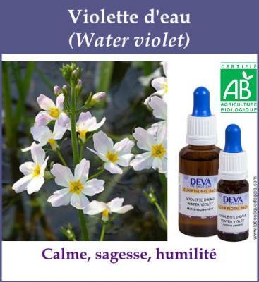 Violette d'Eau