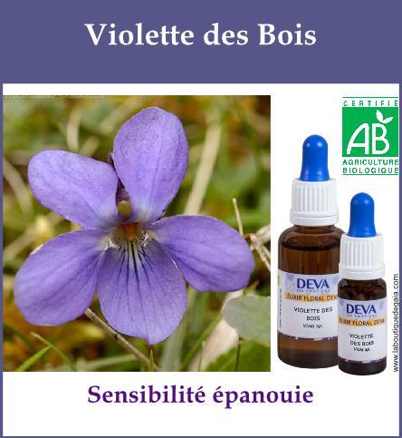 Violette des bois 2