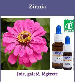 elixir floral zinnia